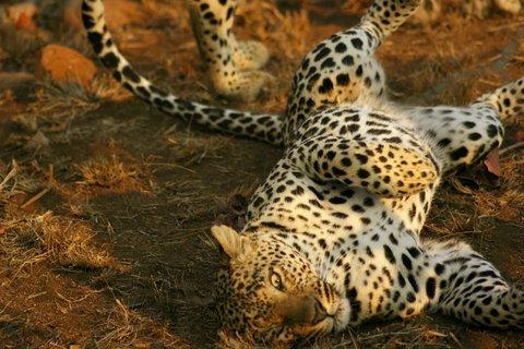 597-makwela-relaxing